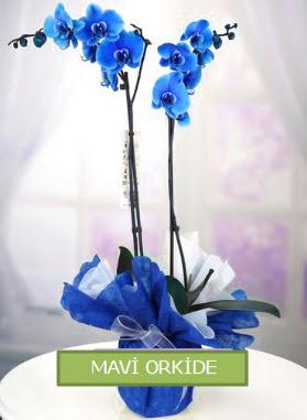 2 dallı mavi orkide  İzmir Konak güvenli kaliteli hızlı çiçek