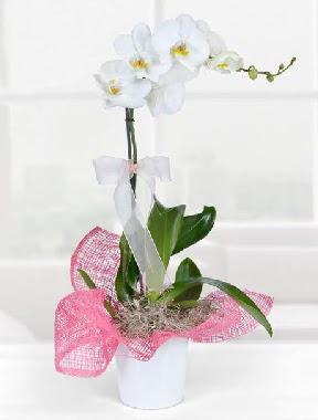 Tek dallı beyaz orkide seramik saksıda  İzmir Konak cicekciler , cicek siparisi