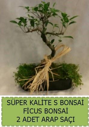 Ficus S Bonsai ve arap saçı  İzmir Konak uluslararası çiçek gönderme
