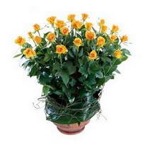 İzmir Konak çiçek gönderme sitemiz güvenlidir  10 adet sari gül tanzim cam yada mika vazoda çiçek