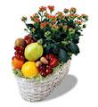 İzmir Konak çiçek siparişi vermek  meyva sepeti ve kalanche