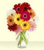İzmir Konak internetten çiçek siparişi  cam yada mika vazoda 15 özel gerbera