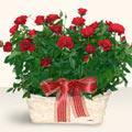 İzmir Konak çiçek siparişi vermek  11 adet kirmizi gül sepette