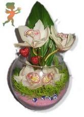 fanus içerisinde 4 orkide  İzmir Konak kaliteli taze ve ucuz çiçekler