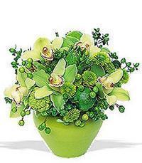 cam yada mika vazoda 5 adet orkide   İzmir Konak çiçekçiler