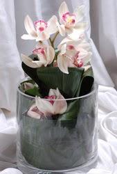 İzmir Konak yurtiçi ve yurtdışı çiçek siparişi  Cam yada mika vazo içerisinde tek dal orkide