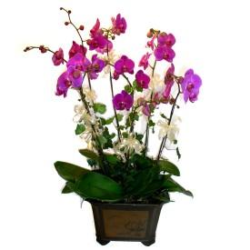 İzmir Konak İnternetten çiçek siparişi  4 adet orkide çiçegi