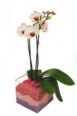 İzmir Konak çiçek yolla  tek dal cam yada mika vazo içerisinde orkide