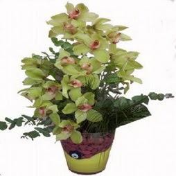 2 dal orkide  İzmir Konak çiçek siparişi vermek  cam vazo içerisinde çiçek model