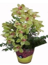 İzmir Konak çiçek gönderme  cam vazo içerisinde 2 dal orkide çiçegi