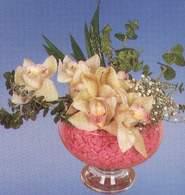 İzmir Konak hediye çiçek yolla  Dal orkide kalite bir hediye