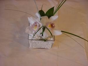 İzmir Konak ucuz çiçek gönder  Iki adet kaliteli bir orkide