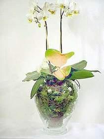 İzmir Konak 14 şubat sevgililer günü çiçek  Cam yada mika vazoda özel orkideler