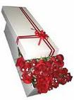 İzmir Konak uluslararası çiçek gönderme  11 adet 1.kalite magnum güller
