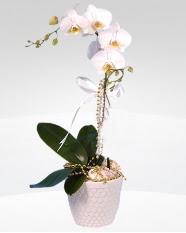 1 dallı orkide saksı çiçeği  İzmir Konak çiçekçiler