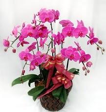 6 Dallı mor orkide çiçeği  İzmir Konak çiçekçi telefonları