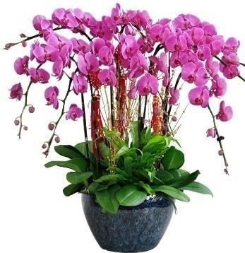 9 dallı mor orkide  İzmir Konak çiçek gönderme