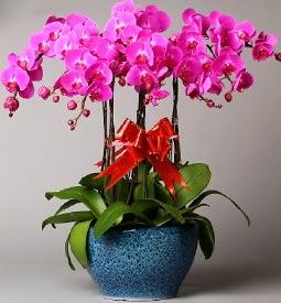 7 dallı mor orkide  İzmir Konak çiçek , çiçekçi , çiçekçilik