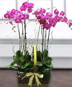 4 dallı mor orkide  İzmir Konak çiçek siparişi sitesi