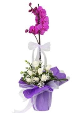 1 dal mor orkide ve 11 adet beyaz gül  İzmir Konak çiçek gönderme