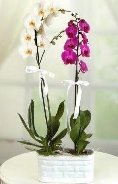 1 mor 1 dal beyaz İthal orkide sepet içerisinde  İzmir Konak hediye çiçek yolla