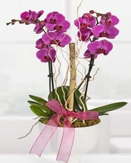 2 dallı nmor orkide  İzmir Konak çiçekçi telefonları