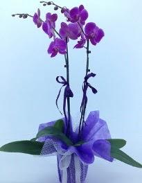2 dallı mor orkide  İzmir Konak çiçekçi mağazası