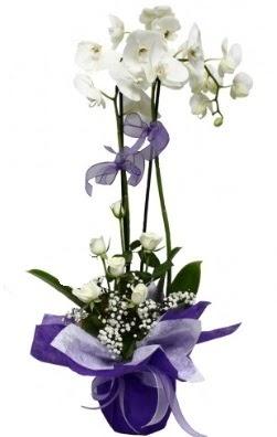2 dallı beyaz orkide 5 adet beyaz gül  İzmir Konak çiçek servisi , çiçekçi adresleri