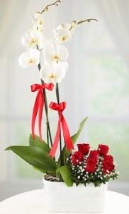 2 dallı beyaz orkide ve 7 kırmızı gül  İzmir Konak çiçek online çiçek siparişi