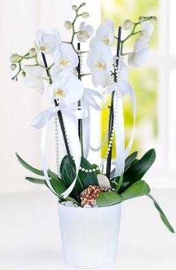 3 dallı beyaz orkide  İzmir Konak cicek , cicekci