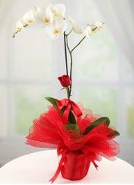 Tek dal beyaz orkide tek dal kırmızı gül  İzmir Konak kaliteli taze ve ucuz çiçekler