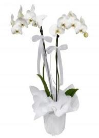2 dallı beyaz orkide  İzmir Konak çiçek siparişi sitesi