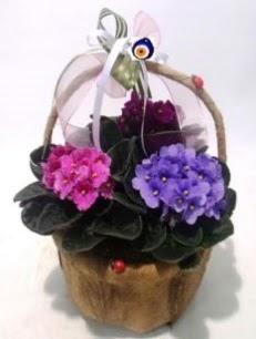 Sepet içerisinde 3 adet menekşe  İzmir Konak çiçekçi telefonları