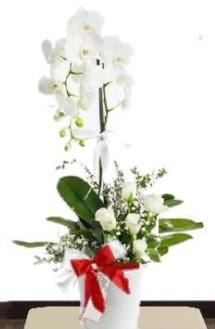 Tek dallı beyaz orkide 5 beyaz gül  İzmir Konak çiçek mağazası , çiçekçi adresleri