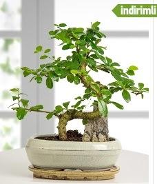 S şeklinde ithal gerçek bonsai japon ağacı  İzmir Konak kaliteli taze ve ucuz çiçekler