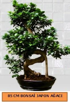 85 CM Japon ağacı Bonsai saksı bitkisi  İzmir Konak hediye sevgilime hediye çiçek