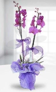 Çift dallı mor orkide LİKE MARKADIR  İzmir Konak çiçekçi telefonları
