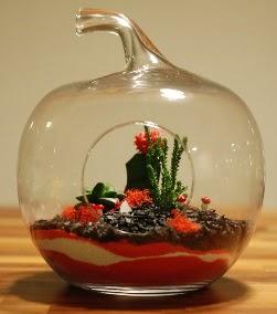 Elma Terrarium 3 kaktüs orta boy  İzmir Konak çiçek gönderme