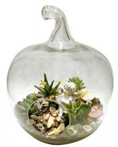 Orta boy elma terrarium 5 kaktüs  İzmir Konak İnternetten çiçek siparişi