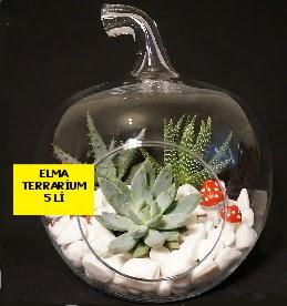 5 kaktüslü Elma terrarium orta boy  İzmir Konak çiçek yolla , çiçek gönder , çiçekçi