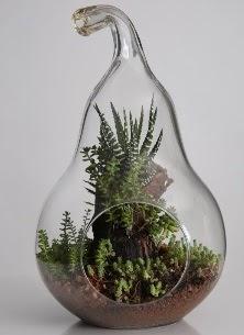 Armut cam küçük boy terrarium  İzmir Konak ucuz çiçek gönder