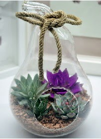 Orta boy armut 3 kaktüs terrarium  İzmir Konak kaliteli taze ve ucuz çiçekler