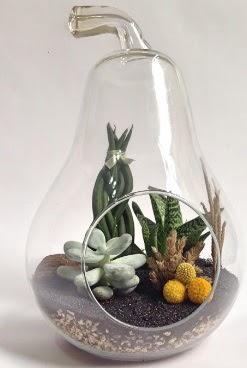 Orta boy armut 5 kaktüs terrarium  İzmir Konak hediye sevgilime hediye çiçek