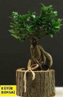 Kütük içerisinde Bonsai japon ağacı  İzmir Konak yurtiçi ve yurtdışı çiçek siparişi