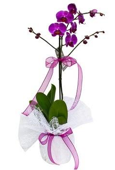 Tek dallı mor orkide  İzmir Konak uluslararası çiçek gönderme