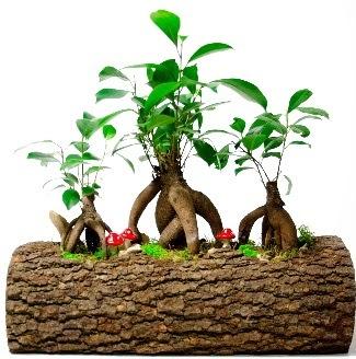 Doğal kütük içinde 3 Bonsai Japon ağacı  İzmir Konak kaliteli taze ve ucuz çiçekler