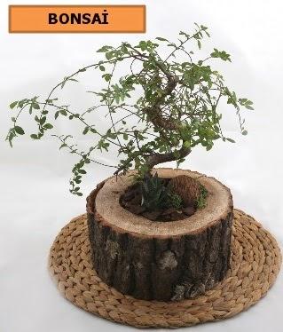 Doğal ağaç kütük içerisinde bonsai bitkisi  İzmir Konak online çiçek gönderme sipariş