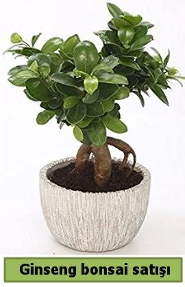 Ginseng bonsai japon ağacı satışı  İzmir Konak uluslararası çiçek gönderme