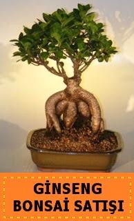 Ginseng bonsai satışı japon ağacı  İzmir Konak İnternetten çiçek siparişi