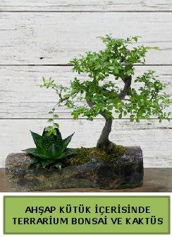 Ahşap kütük bonsai kaktüs teraryum  İzmir Konak yurtiçi ve yurtdışı çiçek siparişi